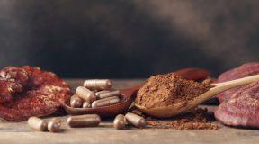 Sei gesund und vital durch natürliche Nahrungsergänzung – mit Vitalpilzen aus Deutschland